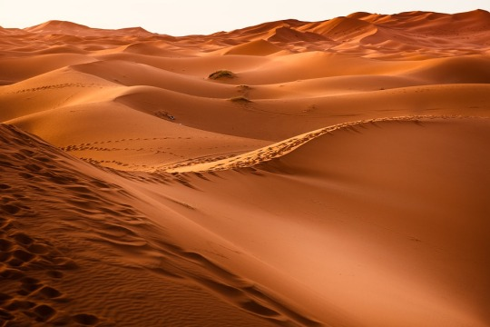 desert-1270345_960_720.jpg