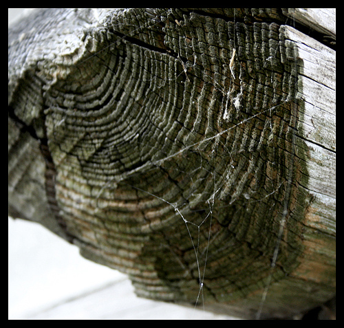 anillos-del-árbol
