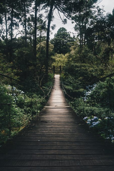 black-hanging-bridge-surrounded-by-green-forest-trees-775201